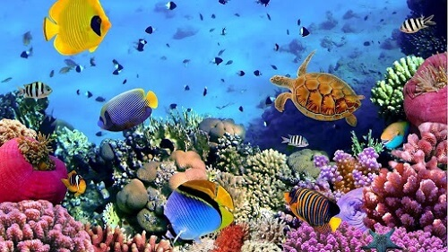 tên các loại cá biển việt nam