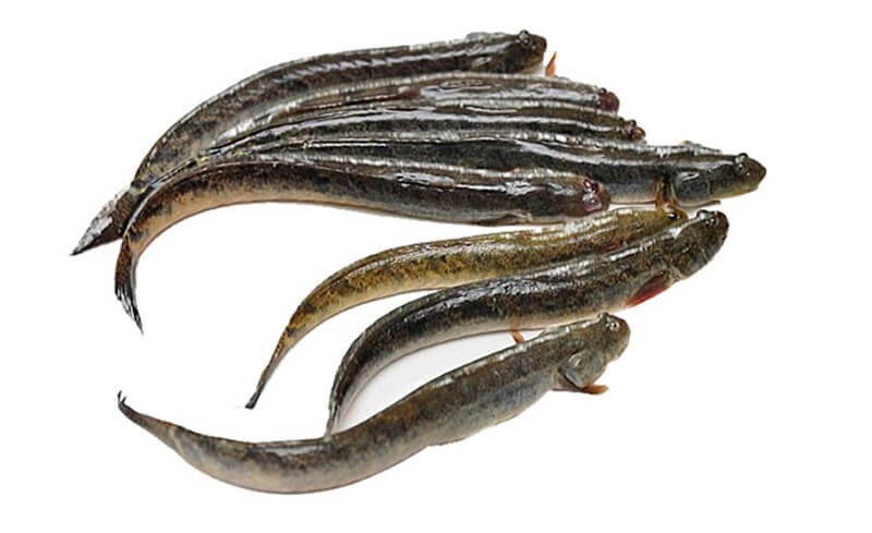 cá kèo