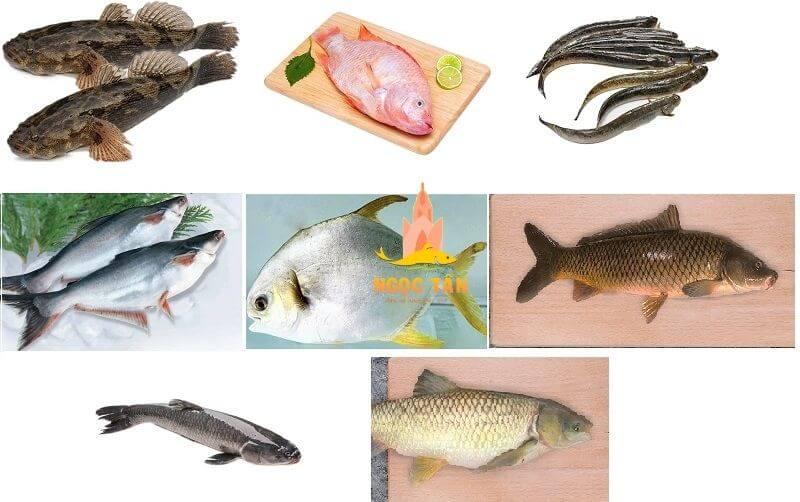 Top 10 các loài cá nước ngọt ngon nhất của Việt Nam mà bạn cần biết?